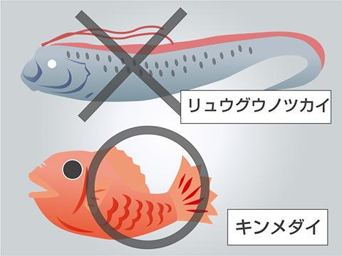 深海じゃなくても平気な深海魚