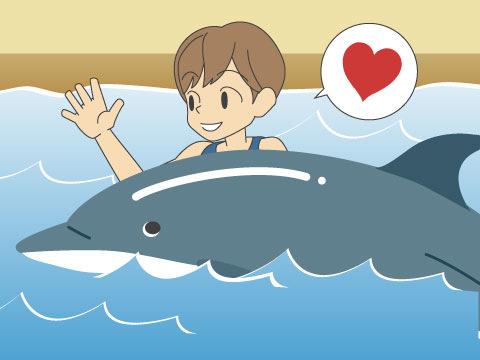 イルカに触れる、イルカと泳ぐ