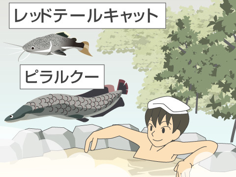 世界の熱帯淡水魚を温泉水で飼育