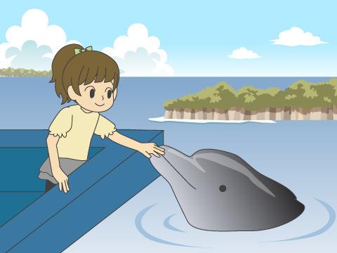 入り江で暮らすイルカたちと触れ合える