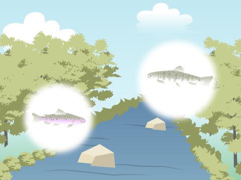 自然に包まれた長良川源流域の生き物を飼育