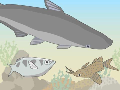 世界の河川から不思議な魚が大集合