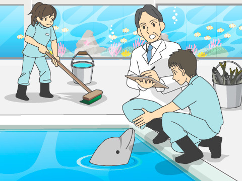 デリケートな海獣の健康管理は大仕事