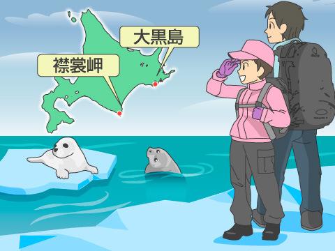 日本周辺で会える海獣たち