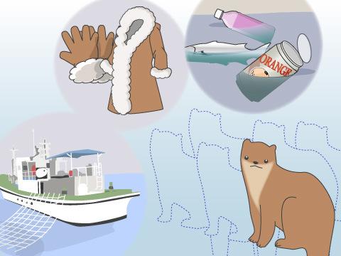 カワウソ属唯一の海棲ほ乳類、ミナミウミカワウソ