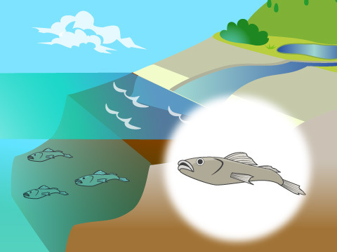 海洋の中にもさまざまな環境がある