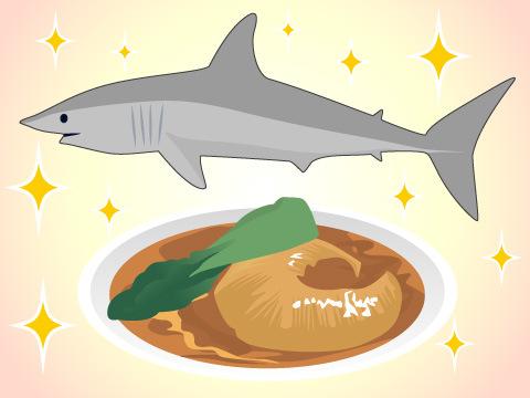 軟骨魚類の仲間たち