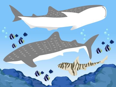 サメとエイがたくさんいる水族館