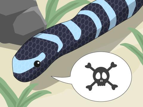 ホントに怖いウミヘビの毒