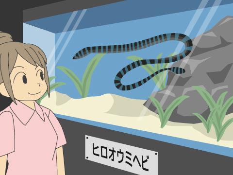 水族館でウミヘビを見ておこう