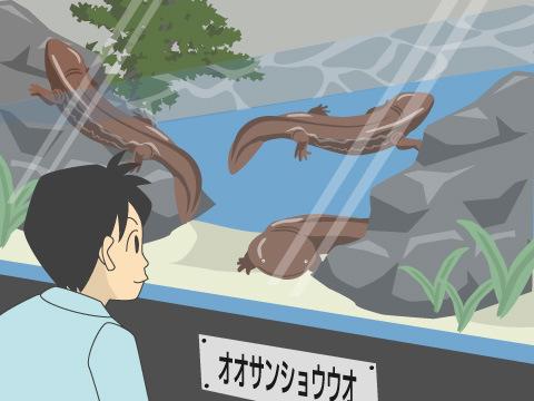 サンショウウオを堪能できる水族館