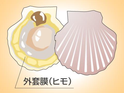 軟体動物としての貝類