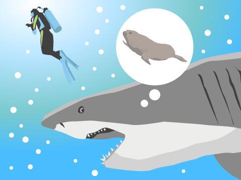 サメが人を襲うワケ