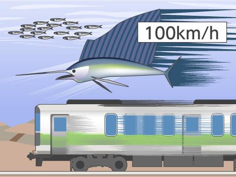 世界で最も速く泳げる魚は?