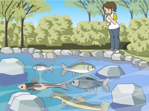 池や沼、水田&水路は、最も身近な観察スポット