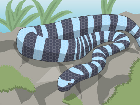 強力な神経毒を持つ爬虫類のウミヘビ