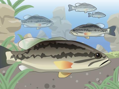 外来魚の種類も様々