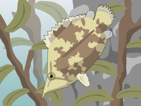 木の葉に擬態する魚