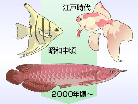 観賞魚の歴史