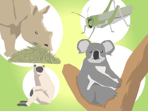 動物たちの食生活
