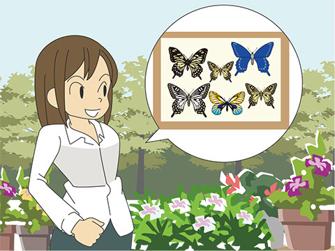 石川県ふれあい昆虫館(石川県)