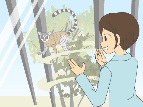 ガラスビュー越しに希少動物の特徴的な生態を観察