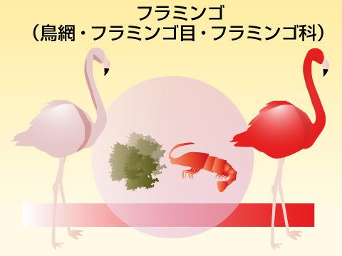 フラミンゴの特徴