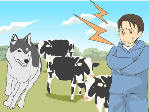 家畜を巡る戦い