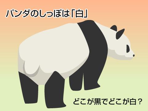 ジャイアントパンダの特徴