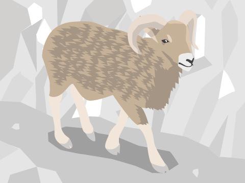家畜ヒツジの祖先「ムフロン」