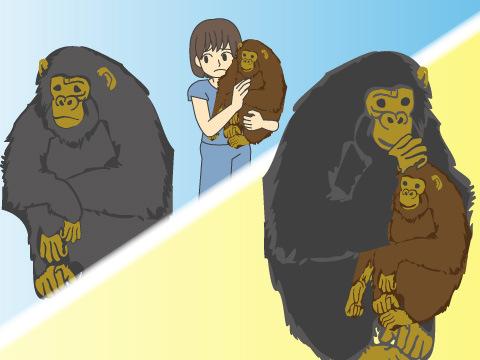 双子のチンパンジー「キララ」と「クララ」