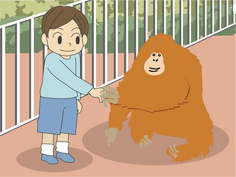 オランウータンの「ピカ」の癒しの握手