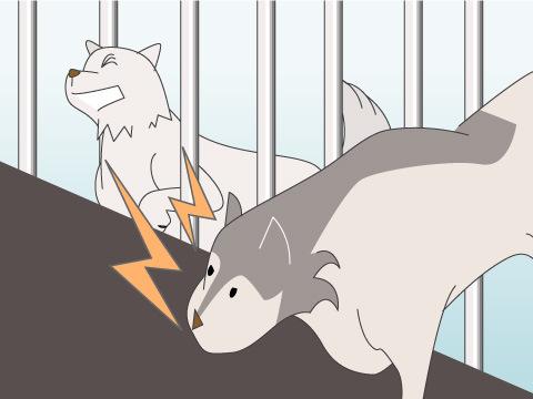 旭山動物園にやってきて6日後、大ケガを負ったマース