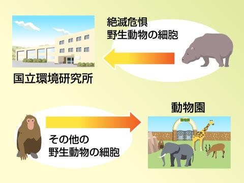 日本の冷凍動物園