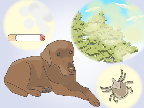 特定の犬種に多い皮膚病