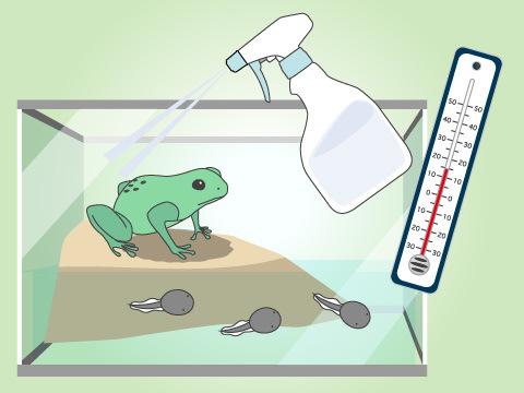 カエルの健康管理の注意点
