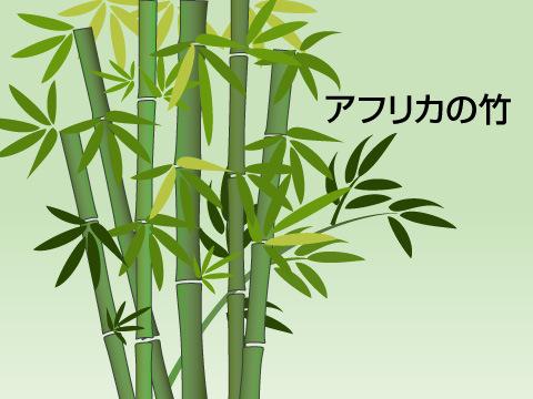 アフリカや南米の竹も