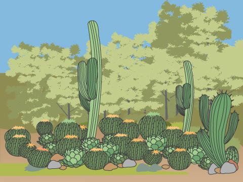 ハンティントン植物園(米・カリフォルニア州)