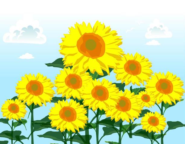 太陽に向かって元気よく咲く「ヒマワリ」