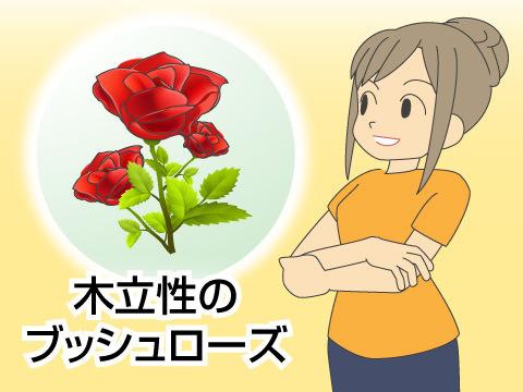 花の女王と呼ばれる「バラ」