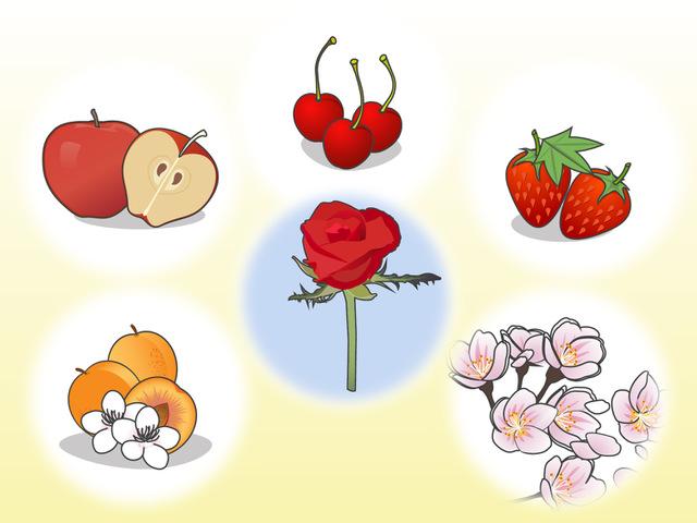 科 果物 バラ の