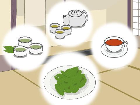 葉からお茶が作られる「チャノキ」