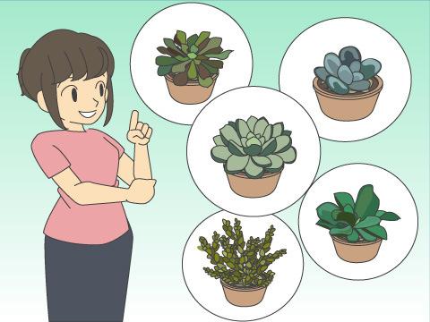 人気の多肉植物
