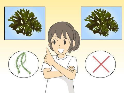 海藻と海草は異なる