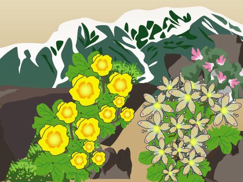 風衝わい性草原の花