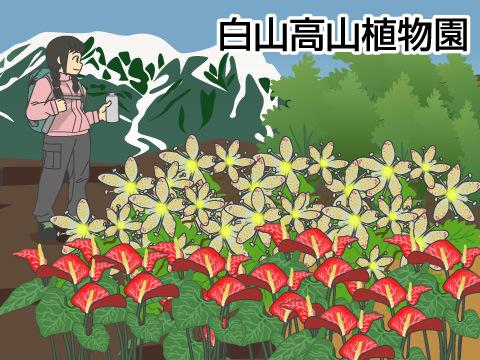 植物園で見られる高山植物