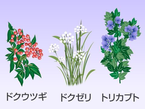三大有毒植物