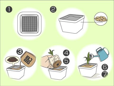 草花の苗を植えましょう
