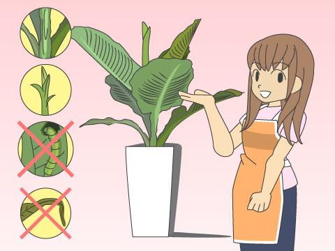 観葉植物の選び方