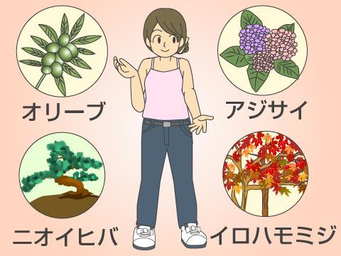 植える場所や目的に合わせたおすすめの樹木
